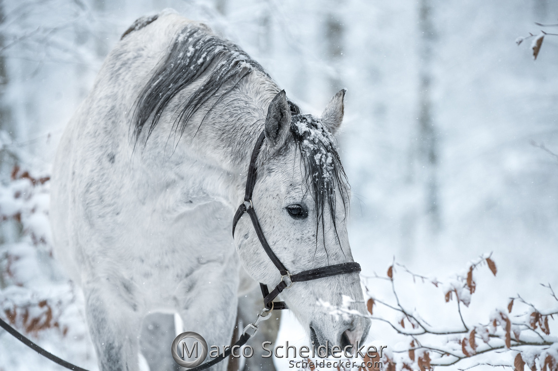 C2019-01-05-0125  -  Gregi im Schnee