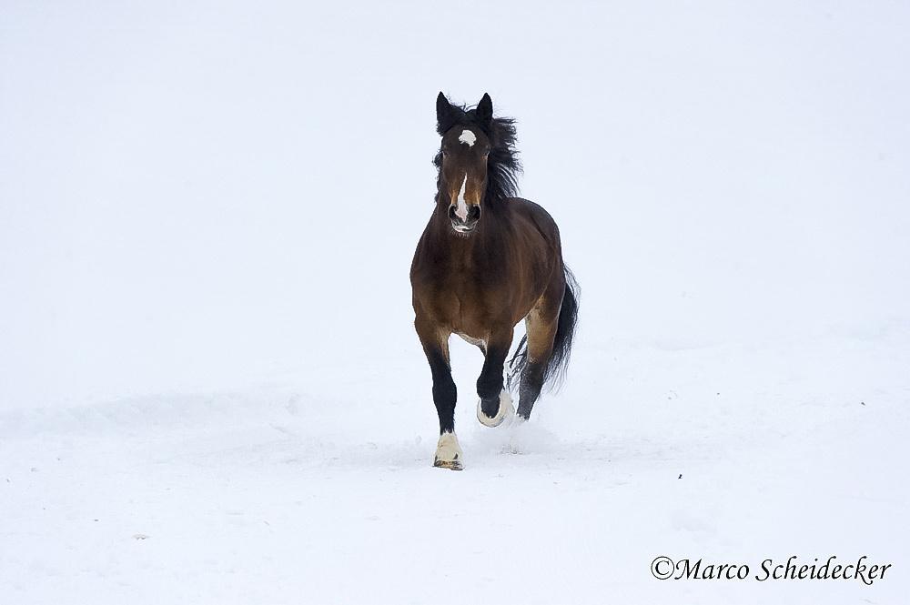C2013-01-13-0021-2 - Noriker im Winter 2013