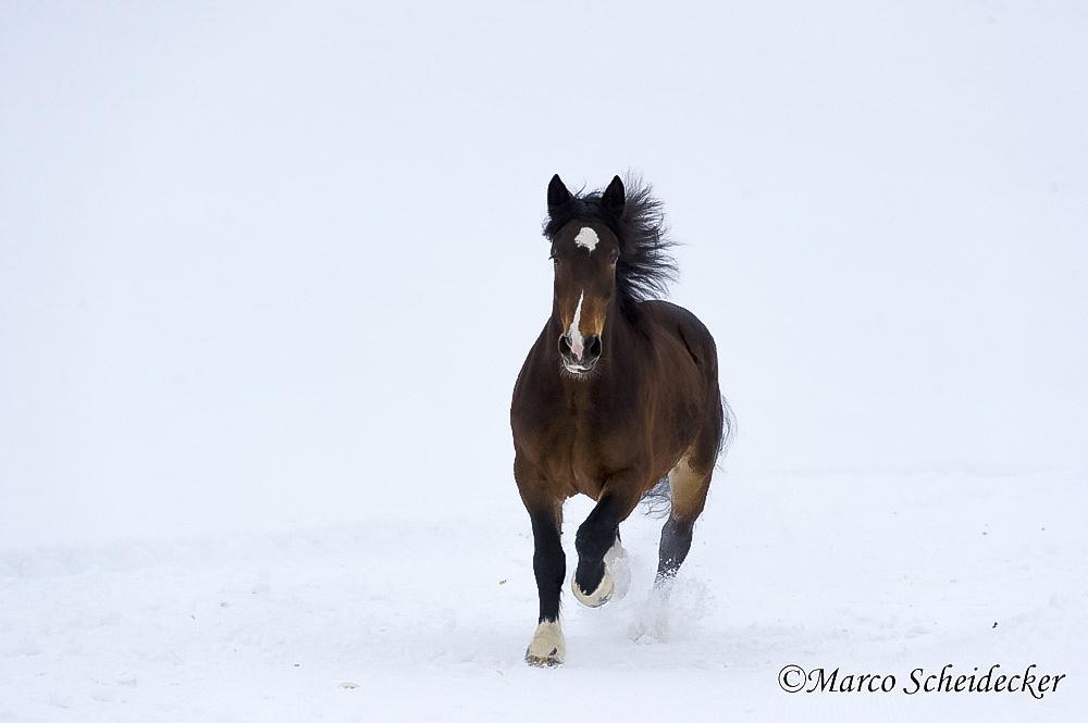 C2013-01-13-0024-2 - Noriker im Winter 2013