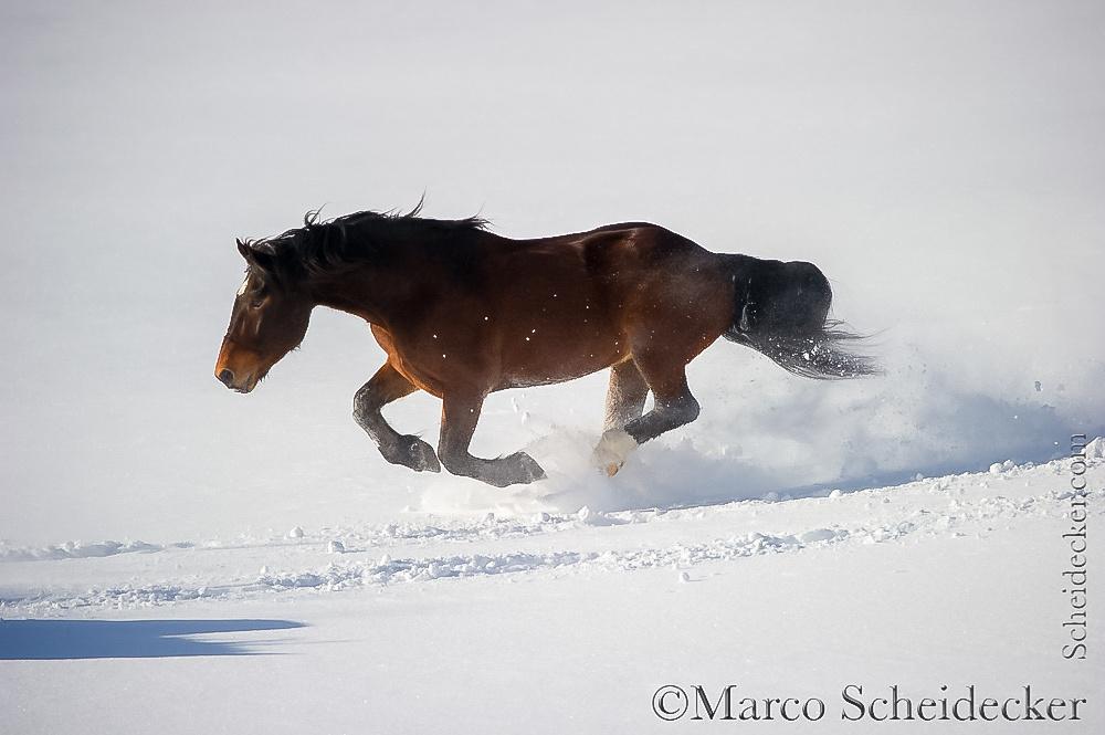 C2016-01-06-0268 - Noriker im Schnee