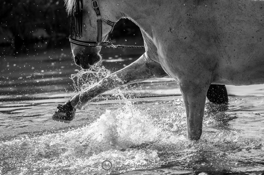 C2021-06-27-0012  -  Maestoso Alea - Wasserspass