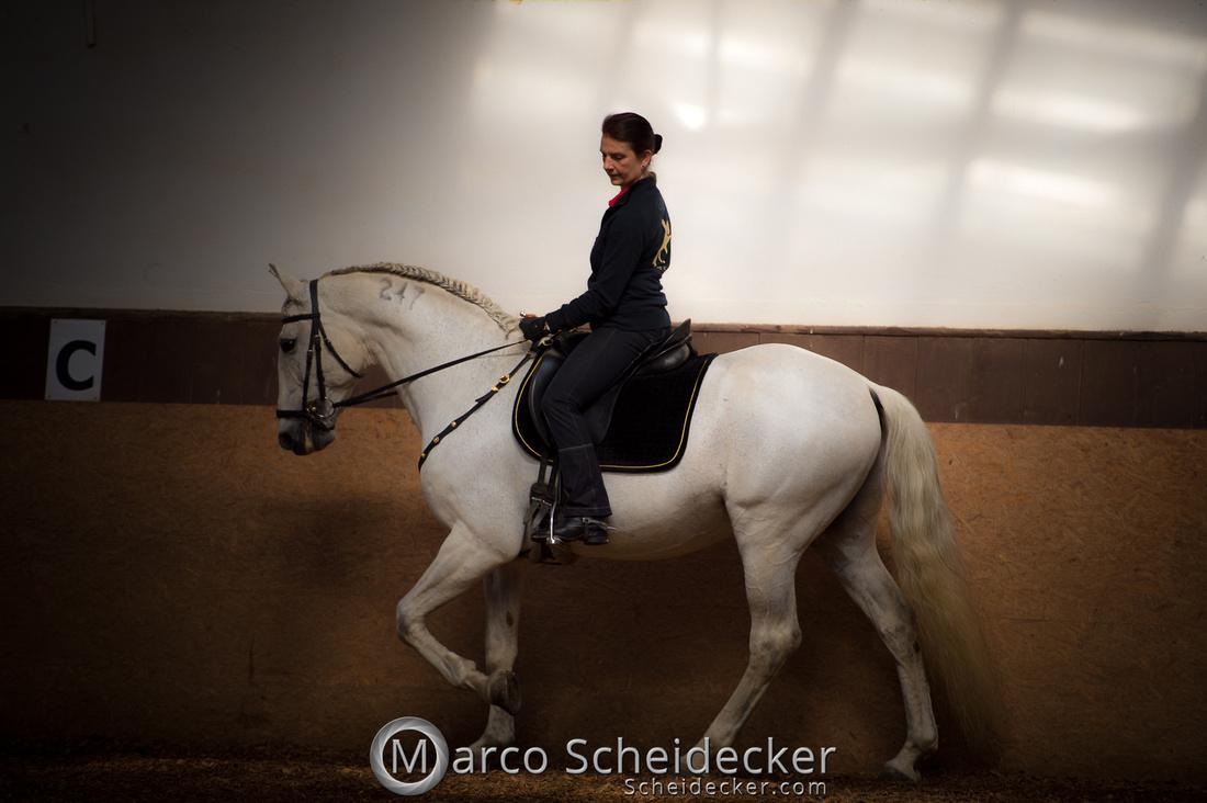 C2018-04-29-0103  -  Ruth Giffels Morgenarbeit 2018 - Thema - Sprache des Pferdes