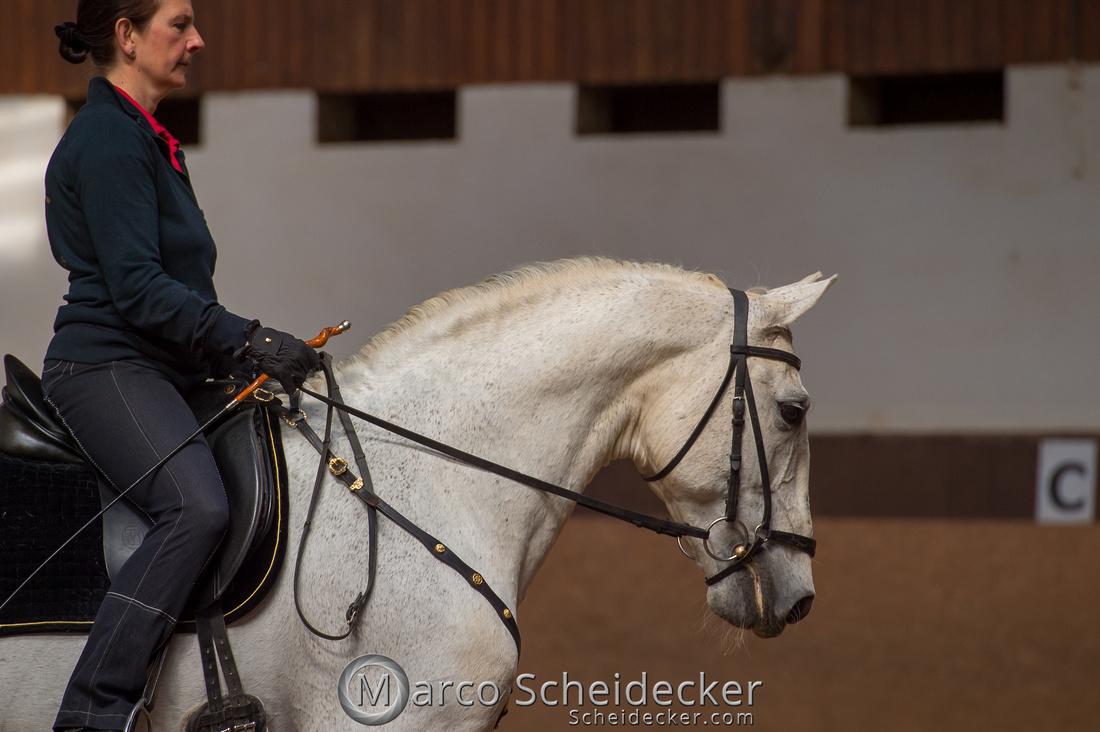 C2018-04-29-0107  -  Ruth Giffels Morgenarbeit 2018 - Thema - Sprache des Pferdes