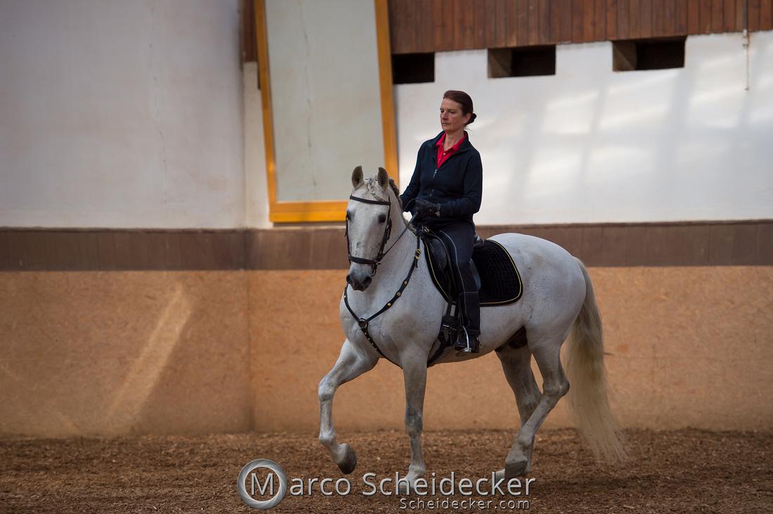 C2018-04-29-0128  -  Ruth Giffels Morgenarbeit 2018 - Thema - Sprache des Pferdes