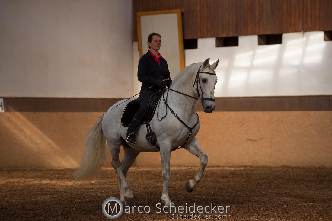 C2018-04-29-0139  -  Ruth Giffels Morgenarbeit 2018 - Thema - Sprache des Pferdes