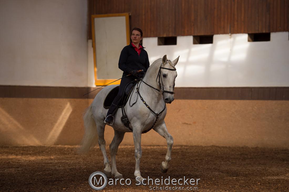C2018-04-29-0142  -  Ruth Giffels Morgenarbeit 2018 - Thema - Sprache des Pferdes