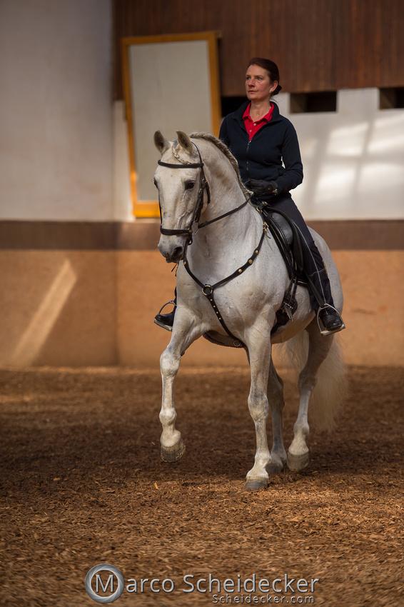 C2018-04-29-0146  -  Ruth Giffels Morgenarbeit 2018 - Thema - Sprache des Pferdes