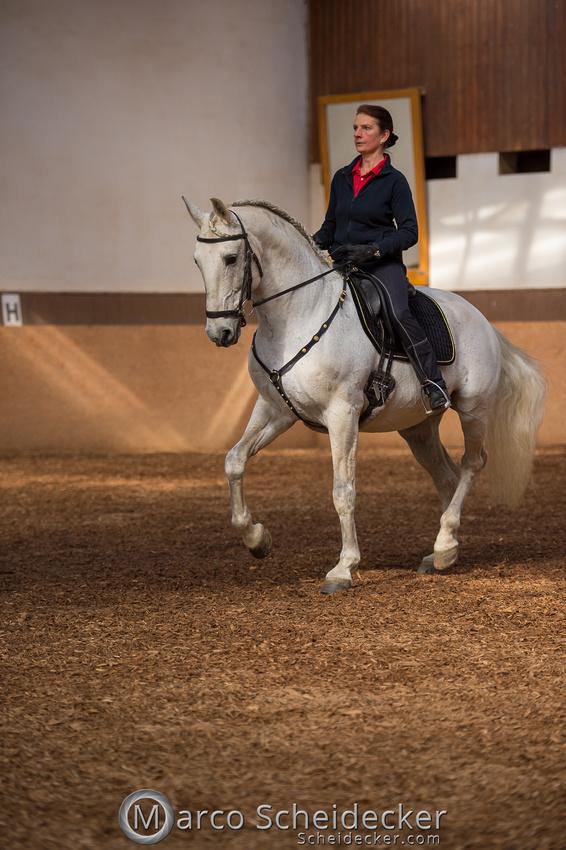 C2018-04-29-0154  -  Ruth Giffels Morgenarbeit 2018 - Thema - Sprache des Pferdes