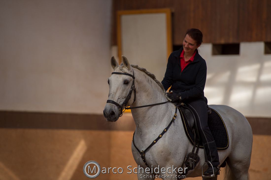 C2018-04-29-0192  -  Ruth Giffels Morgenarbeit 2018 - Thema - Sprache des Pferdes