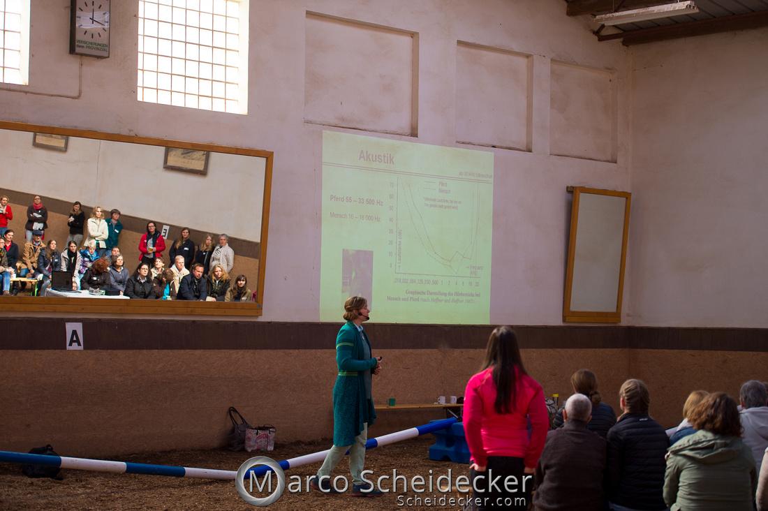C2018-04-29-0205  -  Ruth Giffels Morgenarbeit 2018 - Thema - Sprache des Pferdes