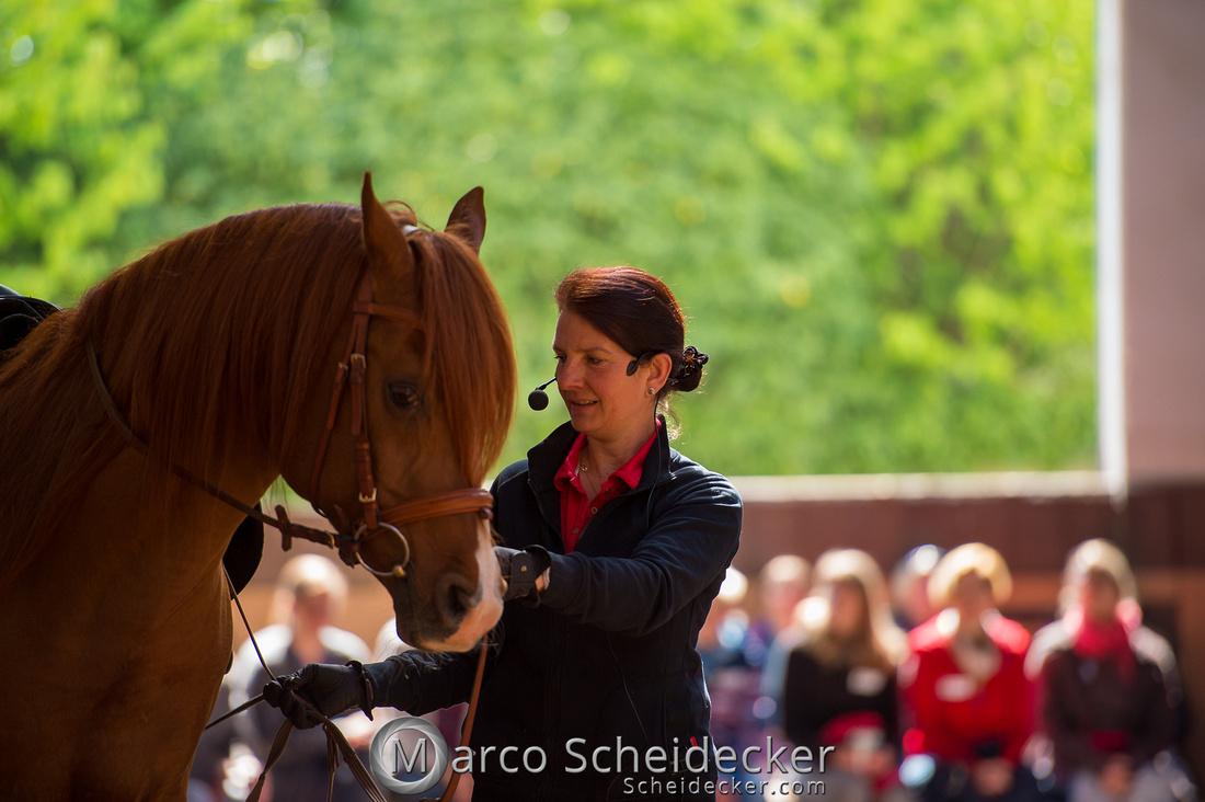 C2018-04-29-0320  -  Ruth Giffels Morgenarbeit 2018 - Thema - Sprache des Pferdes