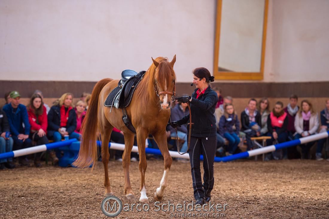 C2018-04-29-0324  -  Ruth Giffels Morgenarbeit 2018 - Thema - Sprache des Pferdes