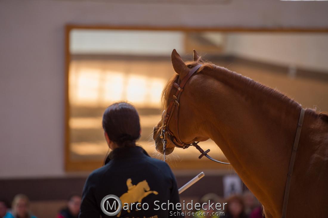 C2018-04-29-0381  -  Ruth Giffels Morgenarbeit 2018 - Thema - Sprache des Pferdes