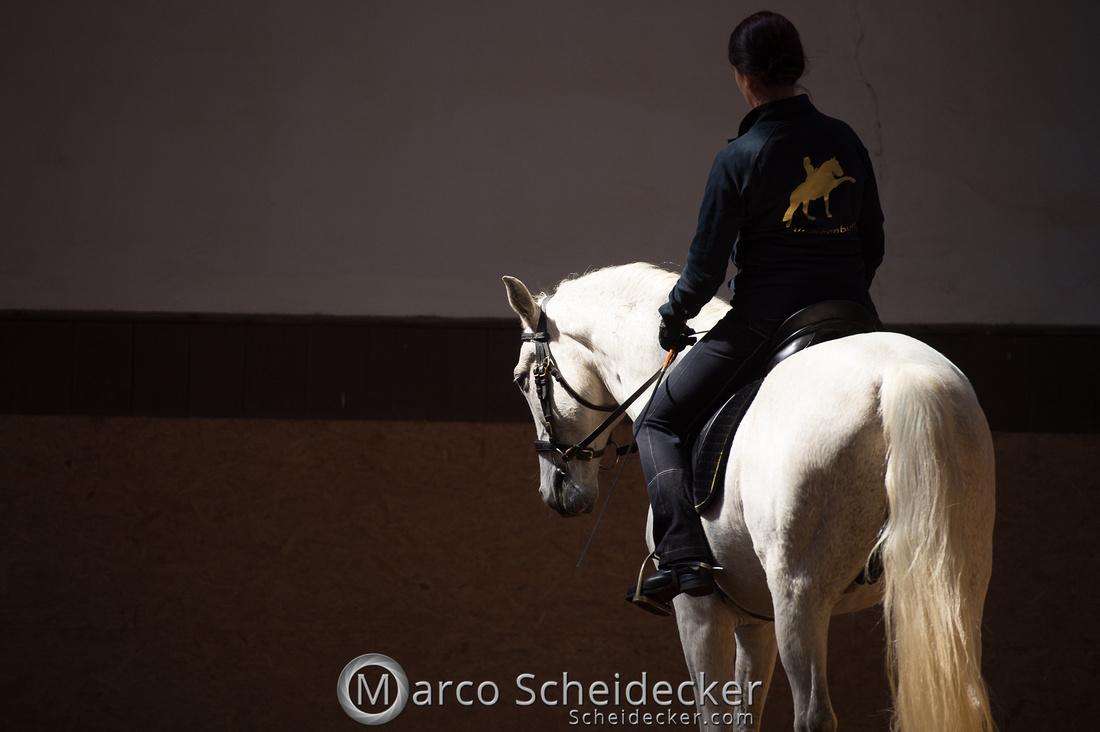 """C2018-04-29-0448  -  Ruth Giffels Morgenarbeit 2018 - Thema """"Sprache des Pferdes"""""""