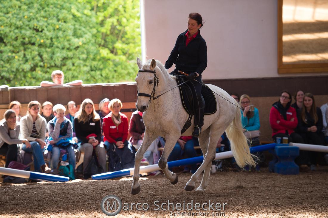 """C2018-04-29-0464  -  Ruth Giffels Morgenarbeit 2018 - Thema """"Sprache des Pferdes"""""""