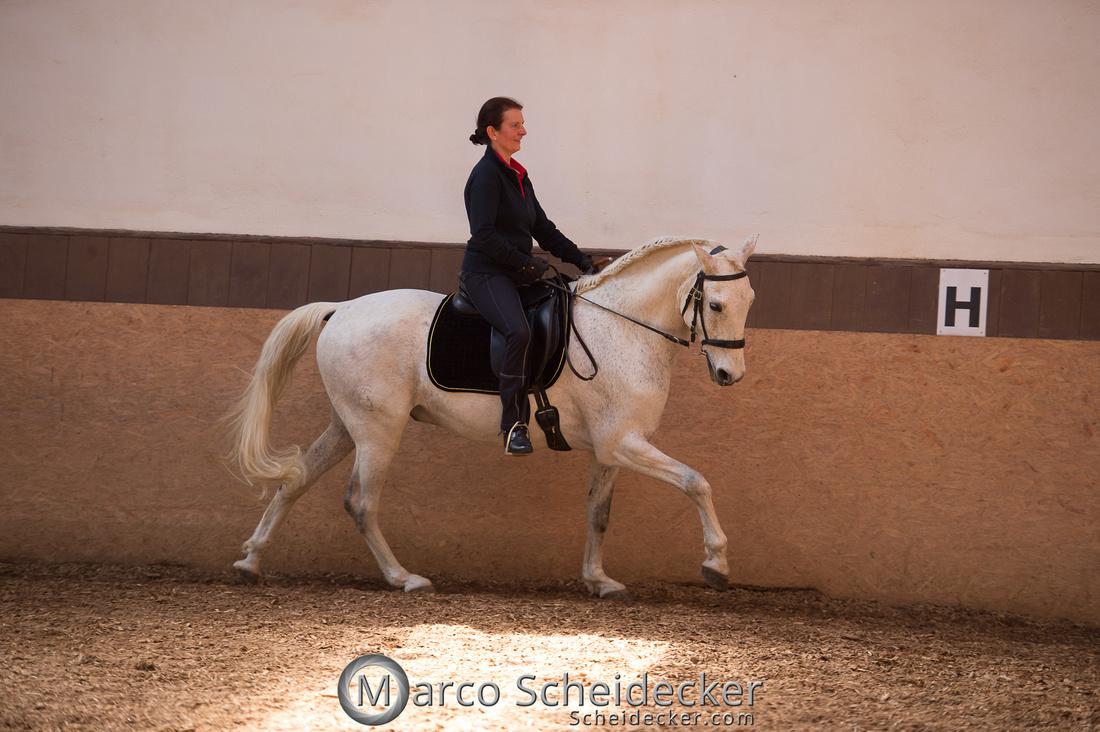 """C2018-04-29-0473  -  Ruth Giffels Morgenarbeit 2018 - Thema """"Sprache des Pferdes"""""""