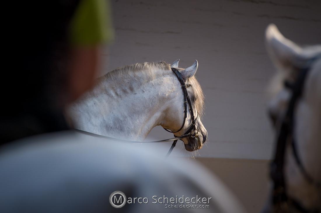 C2019-05-31-8907  -  Feuerwerk der Pferde -  drum herum