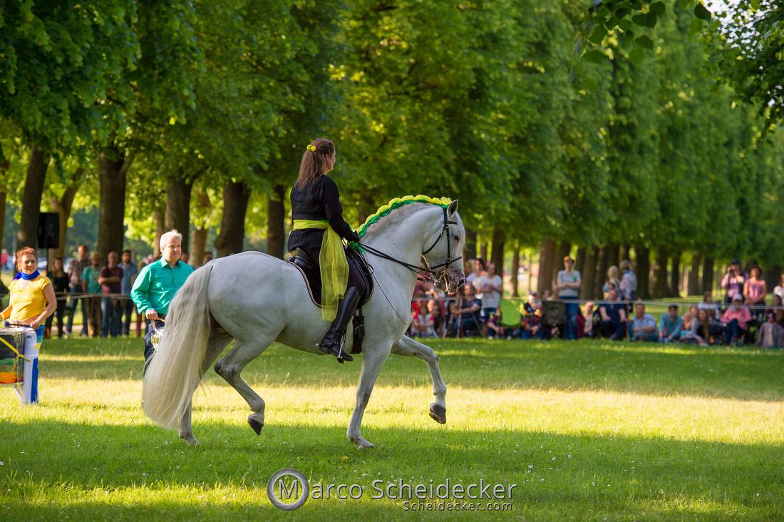 C2019-06-01-0326  -  Feuerwerk der Pferde - Trommelbild