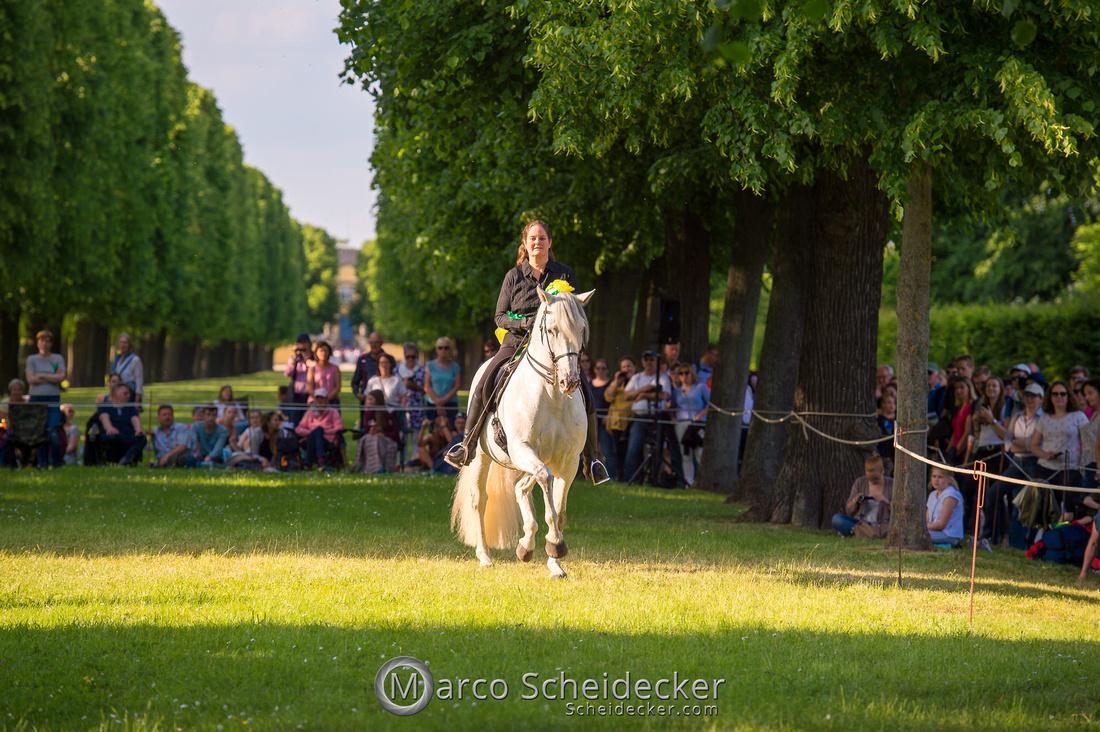 C2019-06-01-0331  -  Feuerwerk der Pferde - Trommelbild