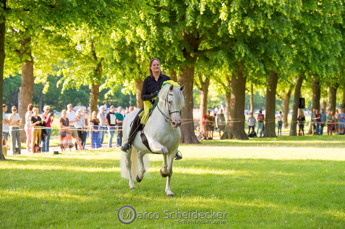 C2019-06-01-0353  -  Feuerwerk der Pferde - Trommelbild