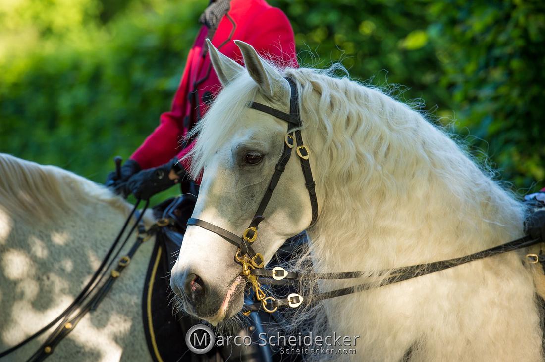 C2019-06-01-0400  -  Feuerwerk der Pferde - Schulen auf der Erde