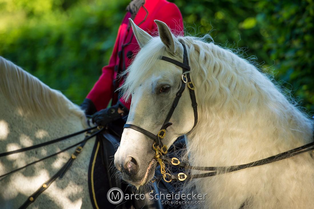 C2019-06-01-0401  -  Feuerwerk der Pferde - Schulen auf der Erde