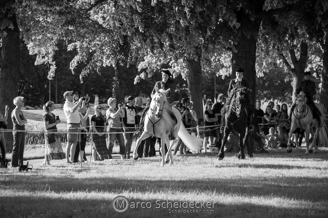 C2019-06-01-0413  -  Feuerwerk der Pferde - Schulen auf der Erde