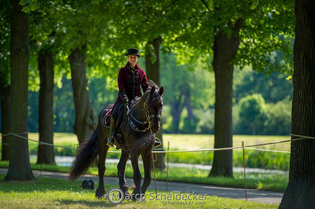 C2019-06-01-0501  -  Feuerwerk der Pferde - Friesenbild