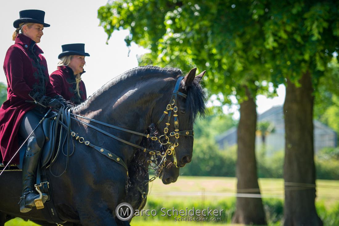 C2019-06-01-0510  -  Feuerwerk der Pferde - Friesenbild