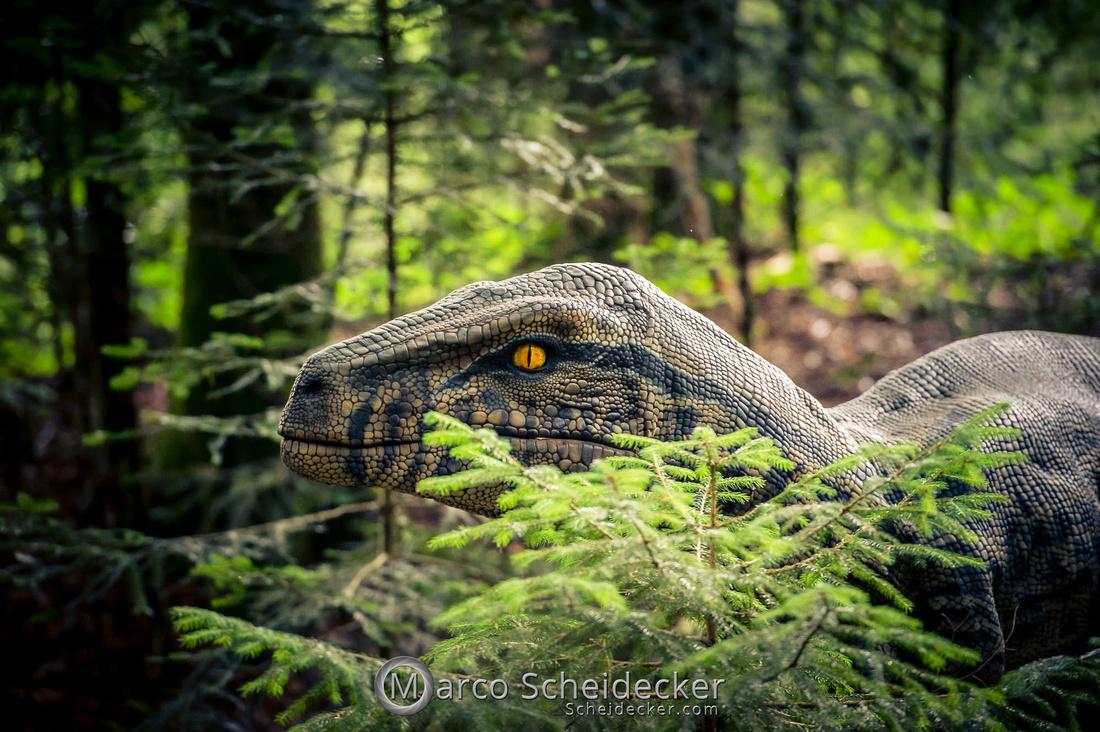 C2019-07-21-0063  -  Ruby the Raptor