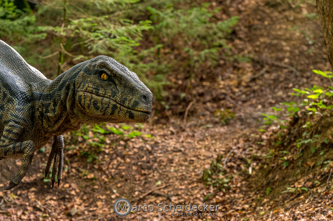 C2019-07-21-0224  -  Ruby the Raptor