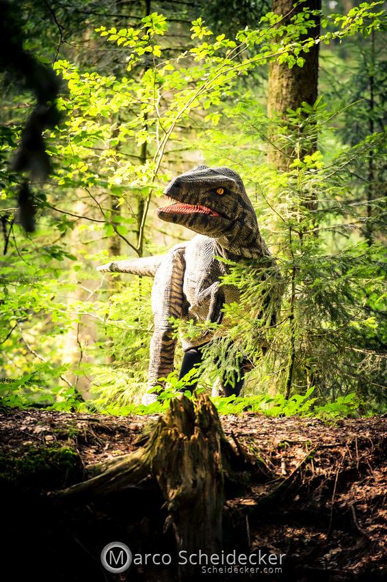 C2019-07-21-0237  -  Ruby the Raptor