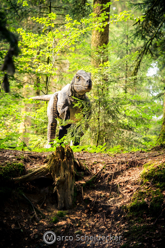 C2019-07-21-0281  -  Ruby the Raptor