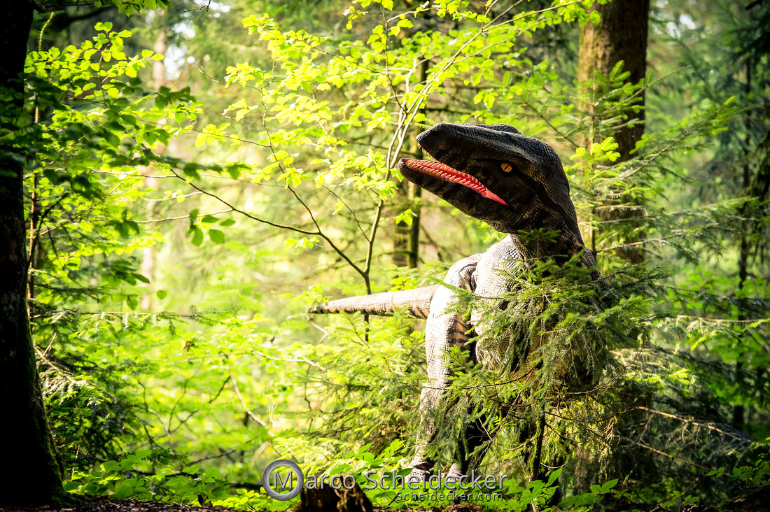 C2019-07-21-0319  -  Ruby the Raptor