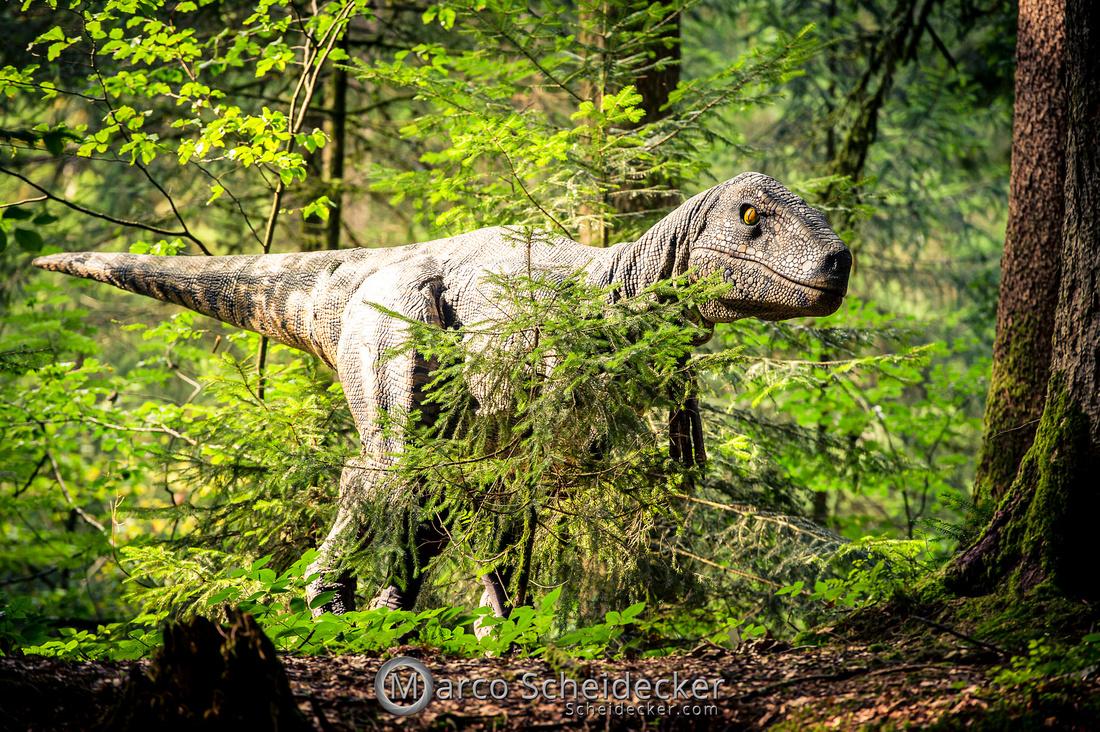 C2019-07-21-0344  -  Ruby the Raptor