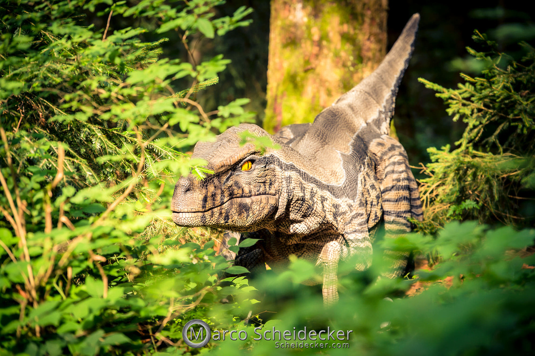 C2019-07-21-0425  -  Ruby the Raptor