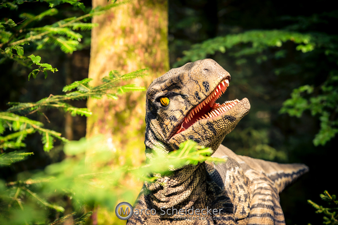 C2019-07-21-0457  -  Ruby the Raptor