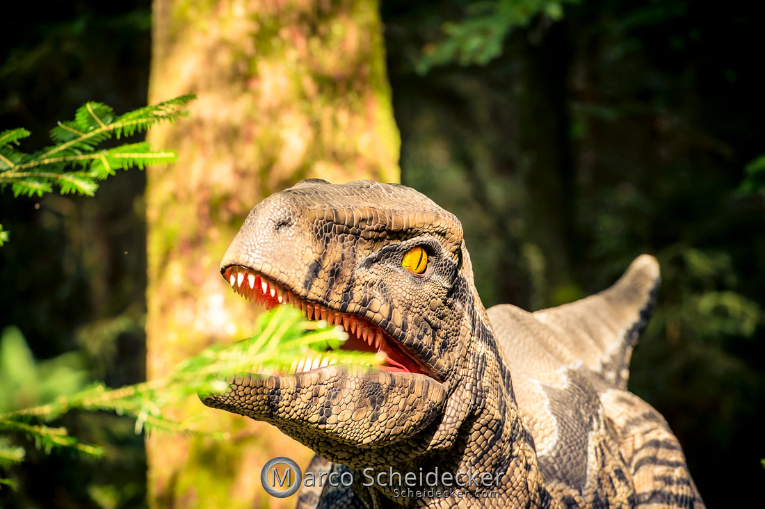 C2019-07-21-0474  -  Ruby the Raptor
