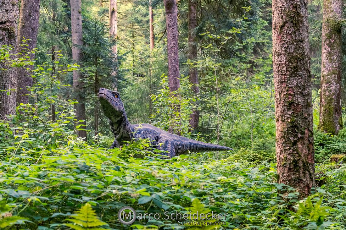 C2019-07-21-0592  -  Ruby the Raptor