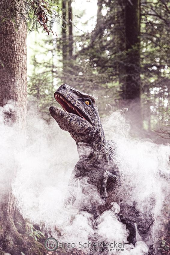 C2019-07-21-1029  -  Ruby the Raptor