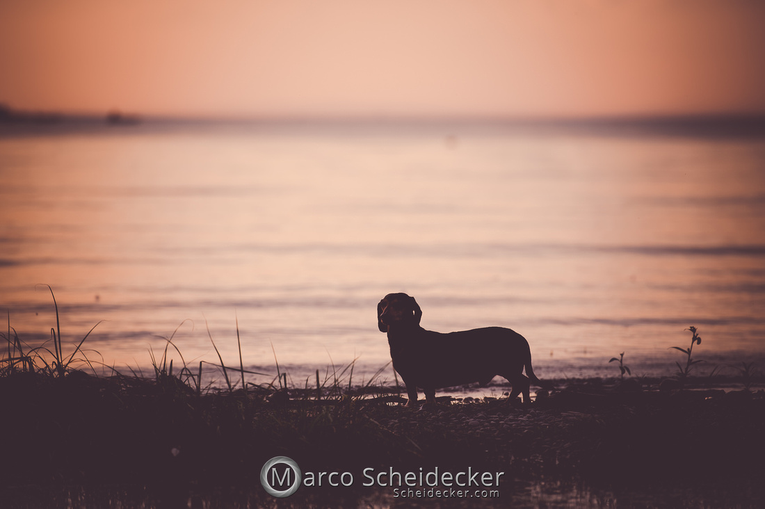 C2019-08-31-0148  -  Herr Anders am Bodensee