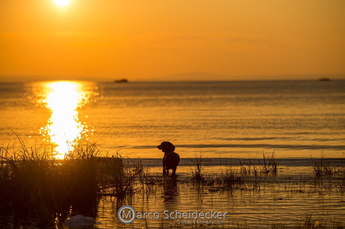 C2019-08-31-0236  -  Herr Anders am Bodensee