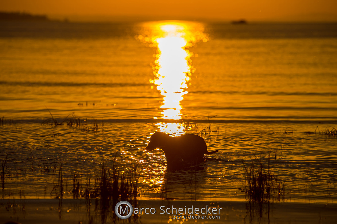 C2019-08-31-0263  -  Herr Anders am Bodensee