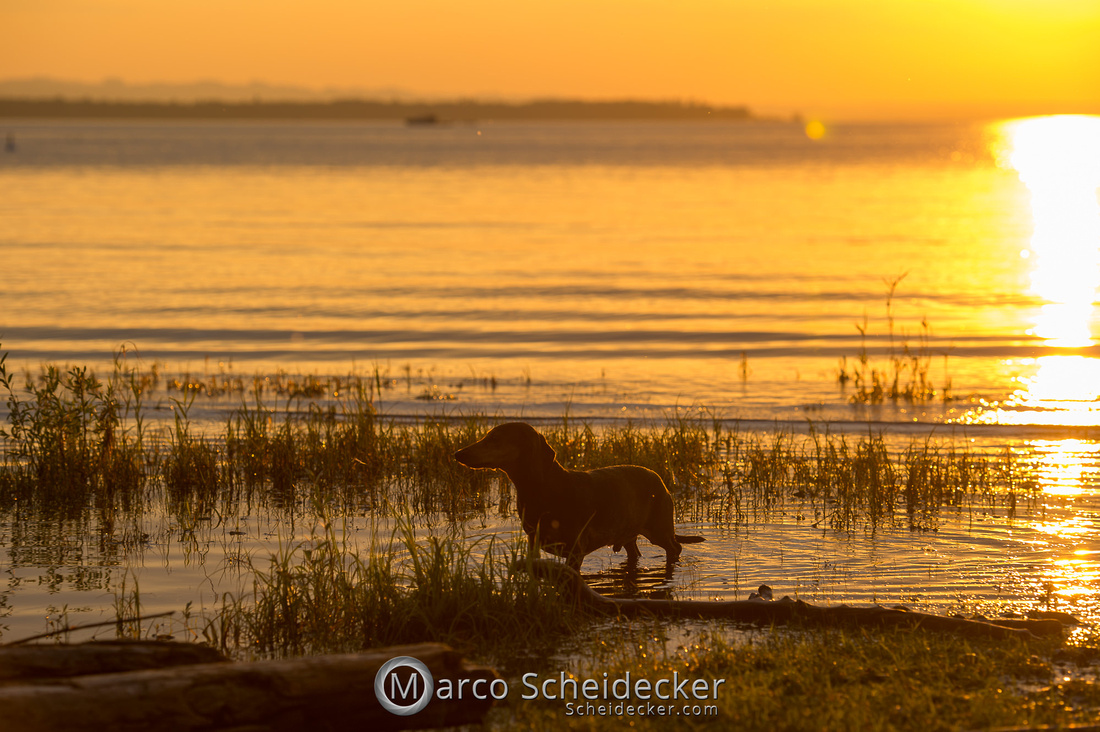 C2019-08-31-0289  -  Herr Anders am Bodensee