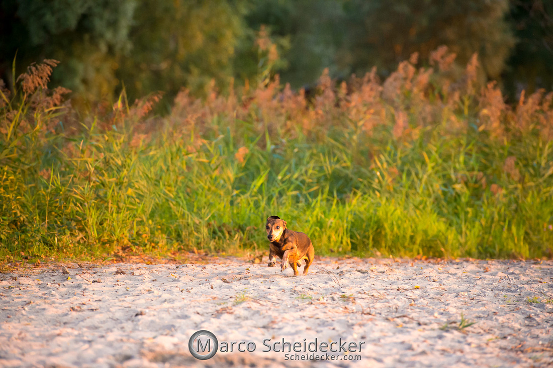 C2019-08-31-0359  -  Herr Anders am Bodensee