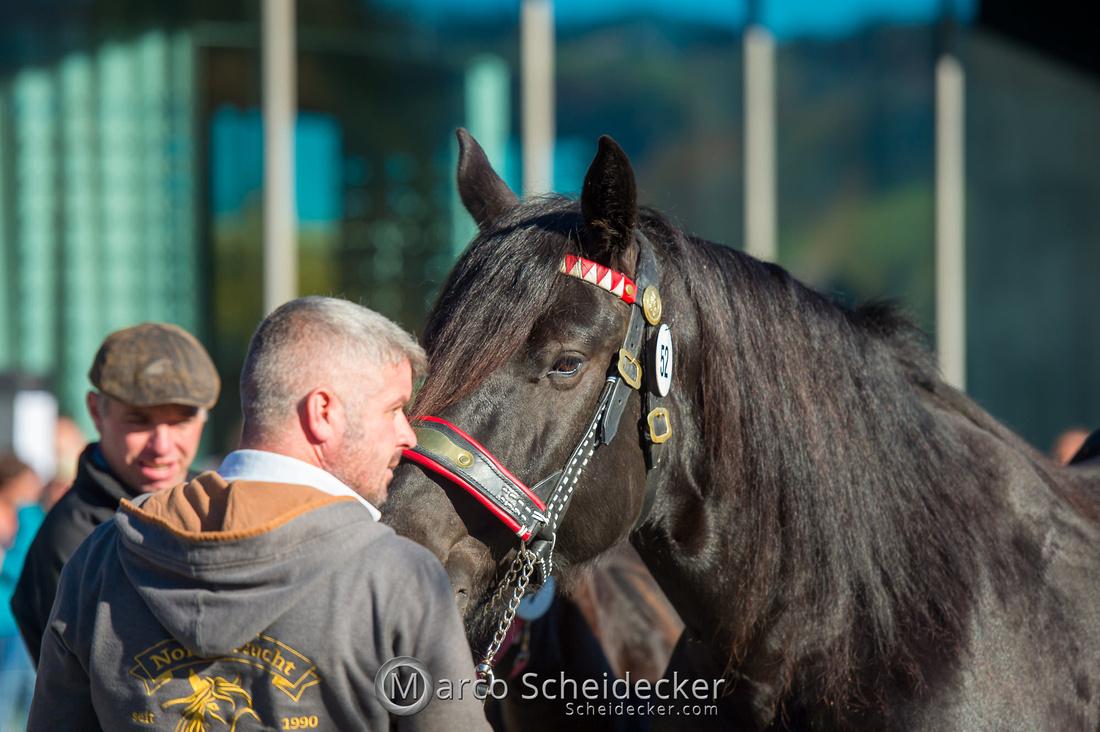 C2019-10-26-0180  -  Noriker Landesschau 2019 in Andelsbuch