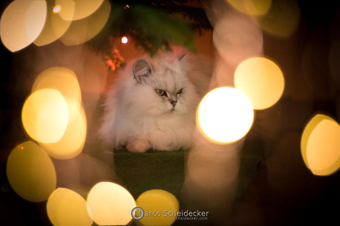 C2020-12-27-0023  -  Kisha und ihr Weihnachtsbaum