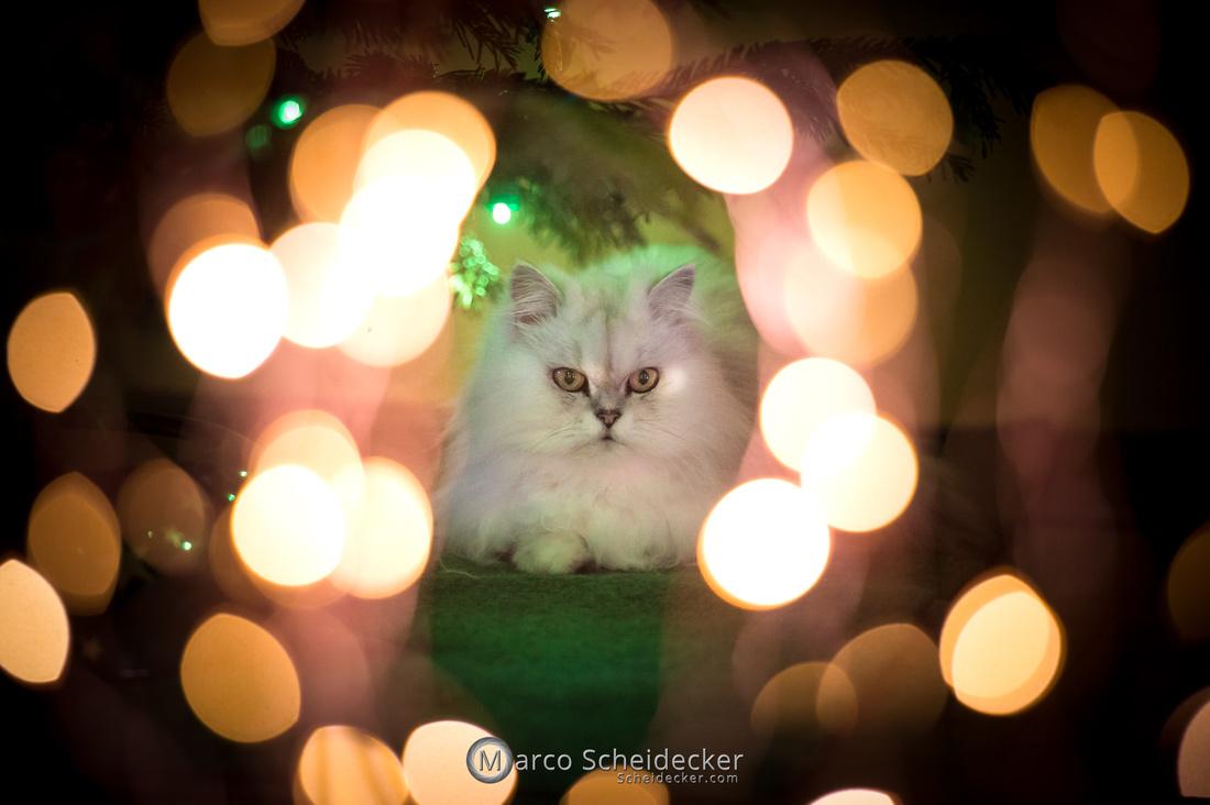 C2020-12-27-0065  -  Kisha und ihr Weihnachtsbaum
