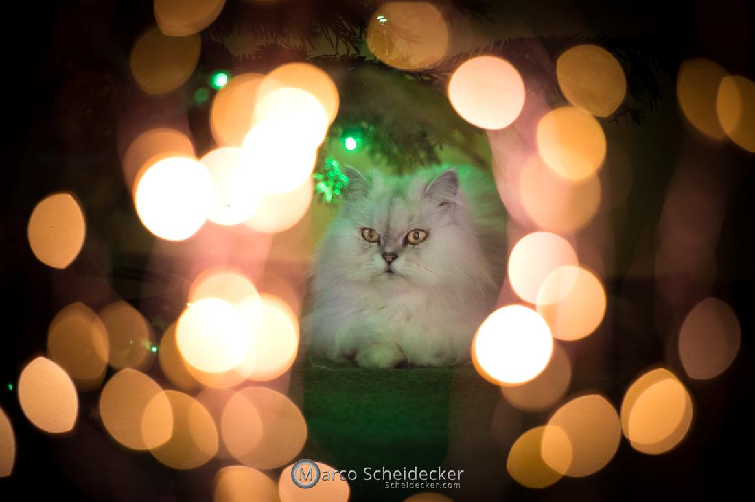 C2020-12-27-0073  -  Kisha und ihr Weihnachtsbaum