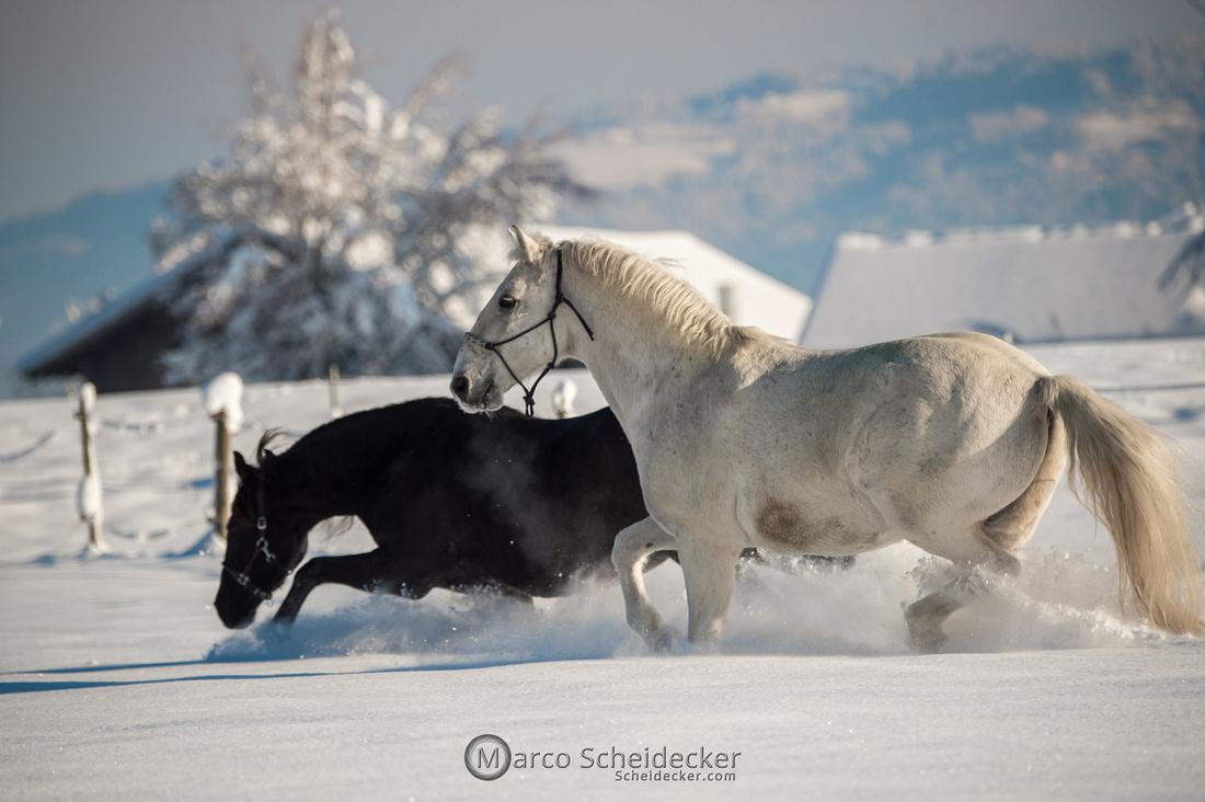 C2021-01-16-2014  -  Spass im Schnee
